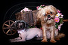 Animals : 2 galleries with 126 photos